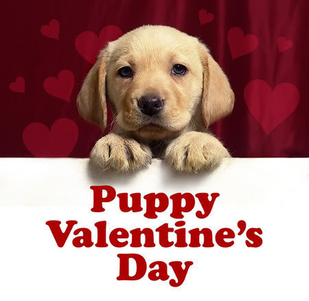Image result for Happy Valentine's Day Cute
