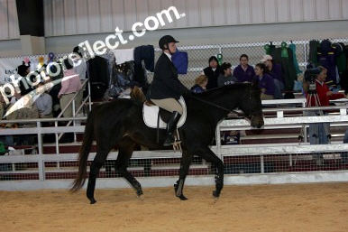 At a Virginia Tech IHSA Show