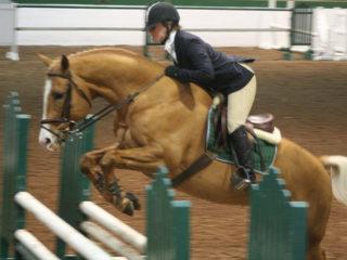 NC Sporthorse Stallion Expo