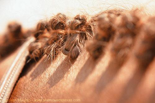 beckett-braids