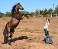 horse-training-rear-782237