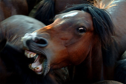 horse_angry