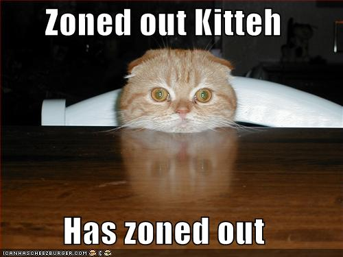 zoned-out-kitty