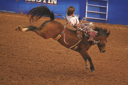 Rodeo Austin Bareback Bronc Riding