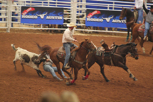 Rodeo Austin Steer Wrestling