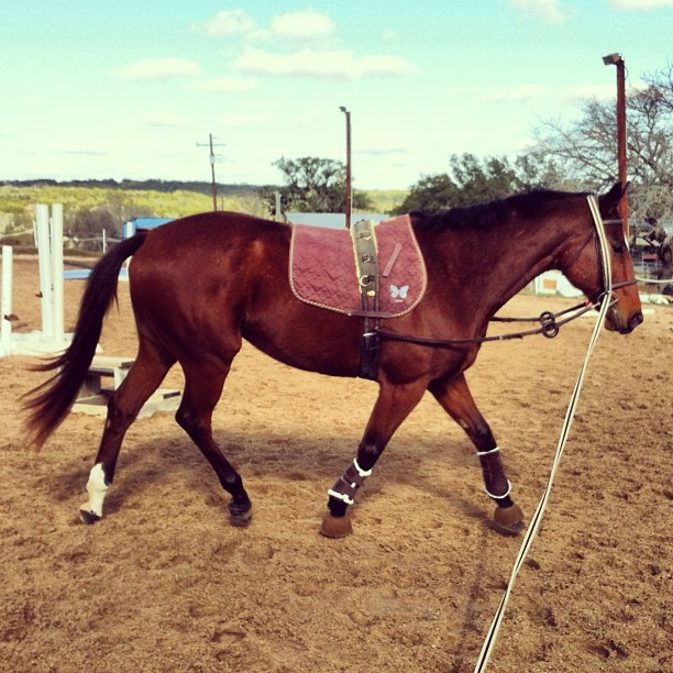 Simon lunging in January