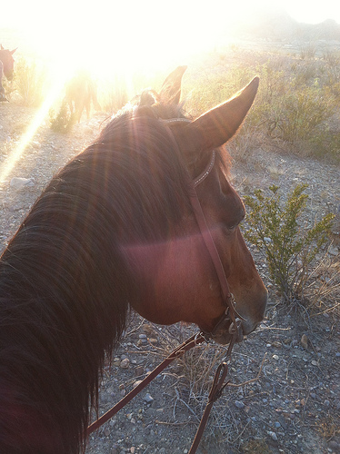 Whiskey, my mount for the trip!  Cute little QH/mutt trail horse.