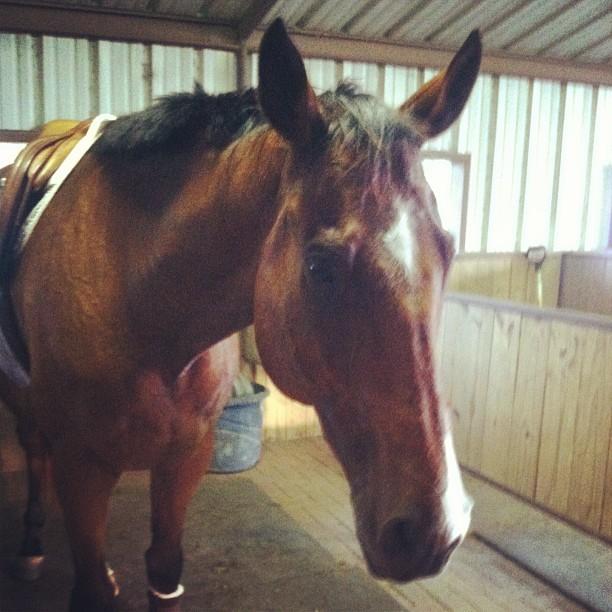 Sweaty naughty horse is naughty.