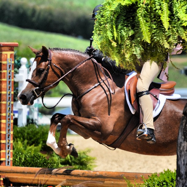 Piper Klemm - If you love pony hunters, you can't do better than this account.  Tons of show photos and all around great hunter 'fix'.