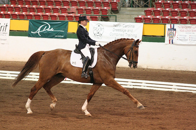 The ideal timing for an extended trot.