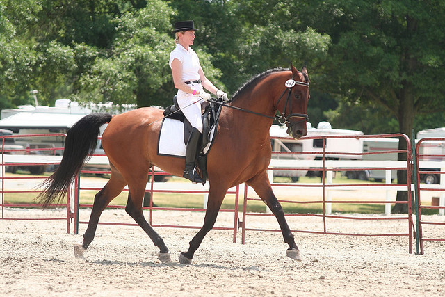 Four feet off the ground is not ideal for a dressage shot.