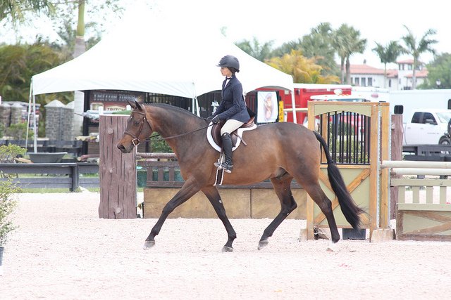 This horse is an exquisite mover, but still the photo could have been taken a smidge later.