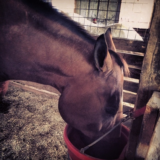 Simon - currently better at eating than trotting.