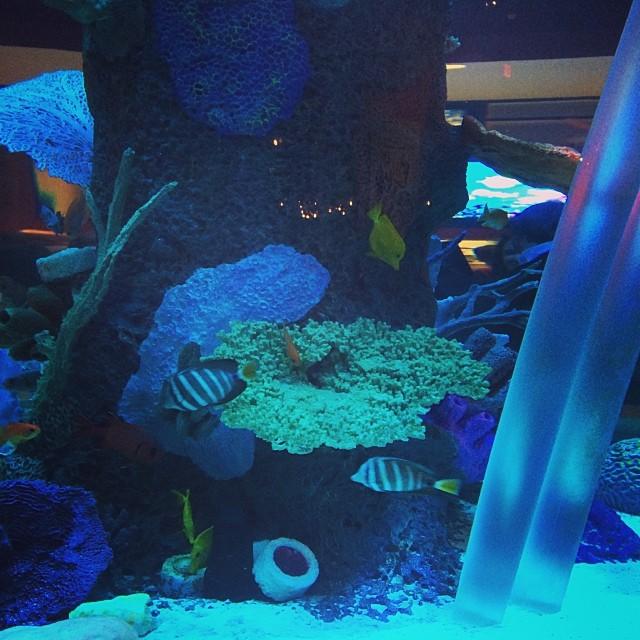 """Cowfish """"Tanked"""" Aquarium"""