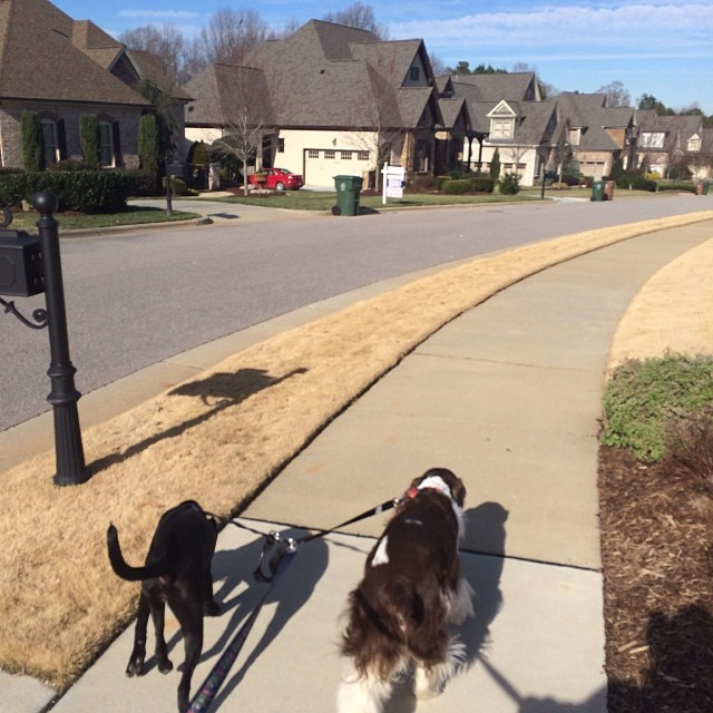 Walking the dogs through a neighborhood the family business builds in.