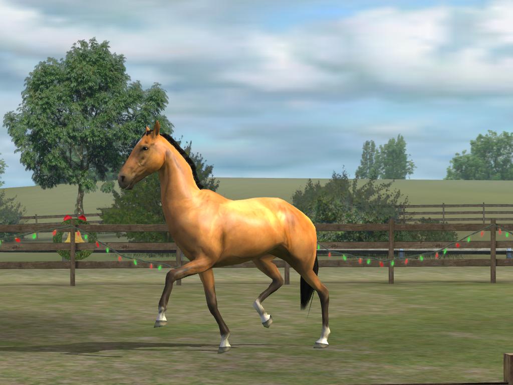 myhorse4