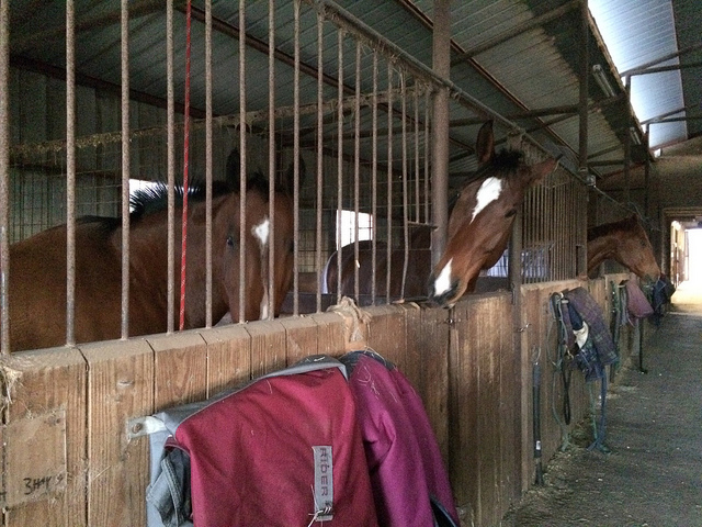 Your horse's stall (and his warmblood doppleganger)