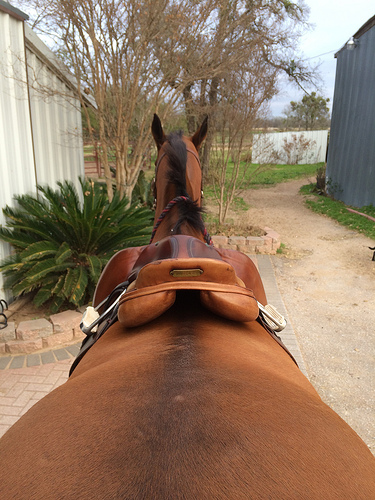Between the ears shot... saddle fitting style