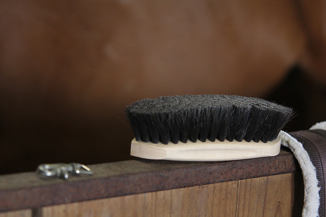 Favorite grooming thing - new soft brush from Adventures of Shyloh!