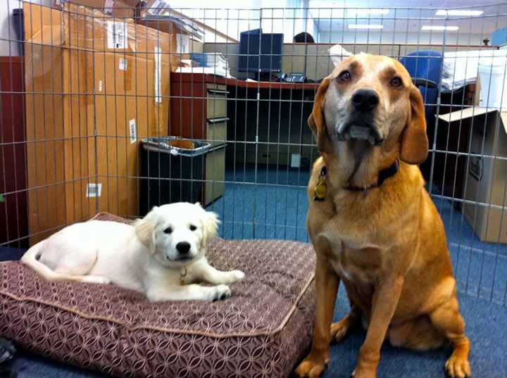 Note from Lauren: Dogs in office = awesome.  I miss this so much!  Jessica's sweet Bailey pictured here to the right.