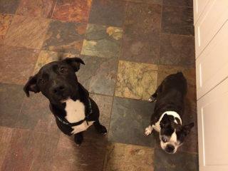 We can has dog treats?!
