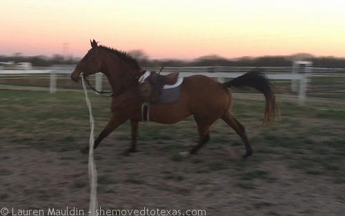 THAT MAKES ME WANT TO GALLOP!