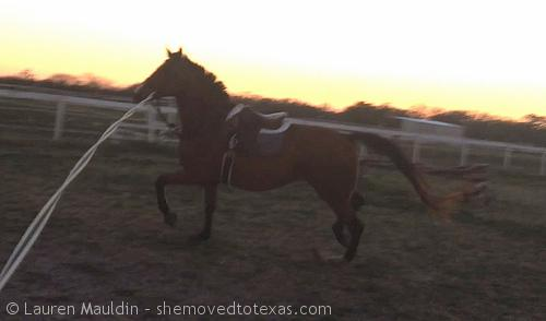 WHY ARE YOU CANTERING?