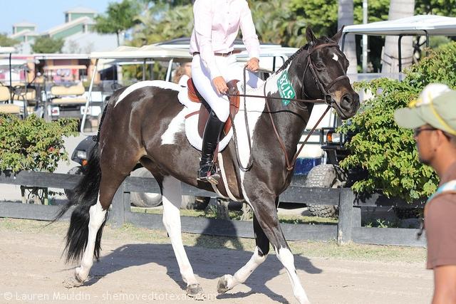 pinto-hunter-pony2