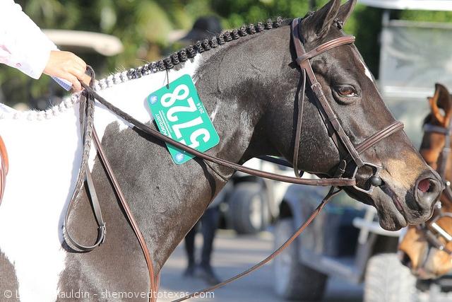 pinto-hunter-pony
