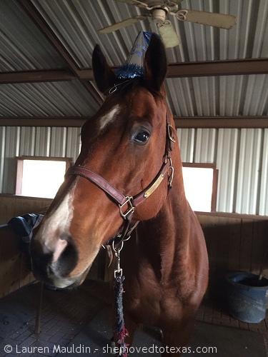 horse-birthday-hat2
