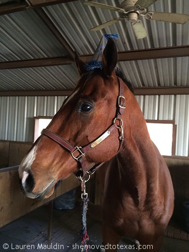 horse-birthday-hat