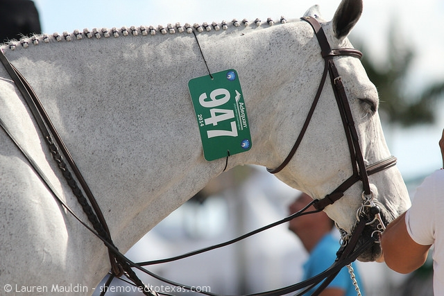 hunter-horse-ringside