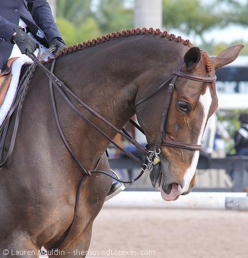 wef-equitation-horse