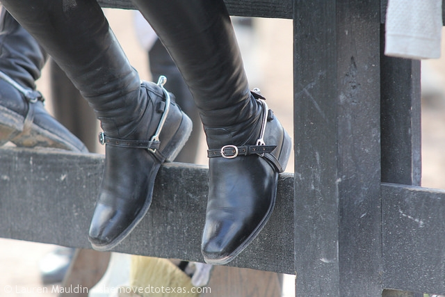 horse-show-boots