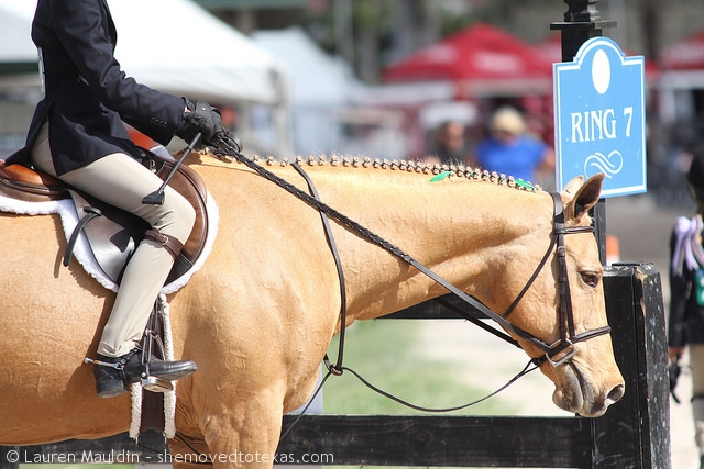 palomino-hunter-pony