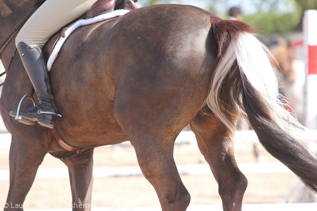 skunk-tail-horse