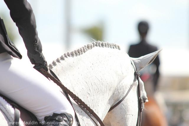 equitation-horse