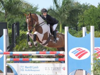 pinto-equitation-horse2