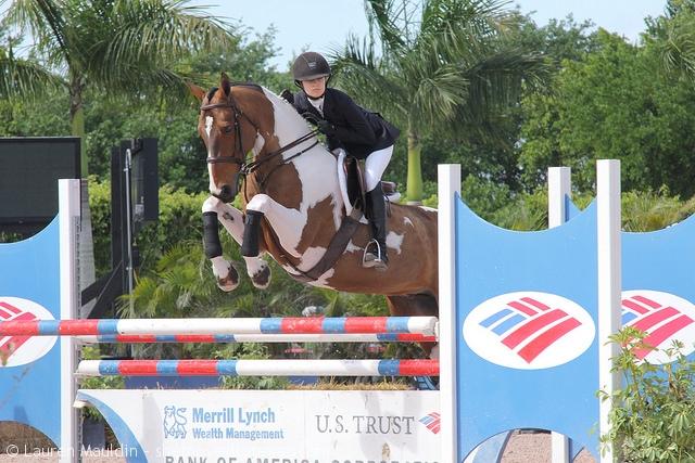pinto-equitation-horse2