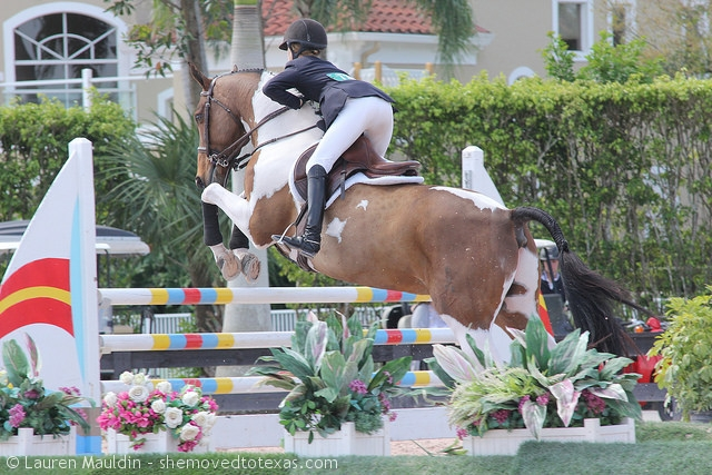 pinto-equitation-horse