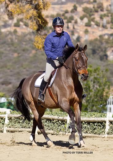 equestrian-coach6
