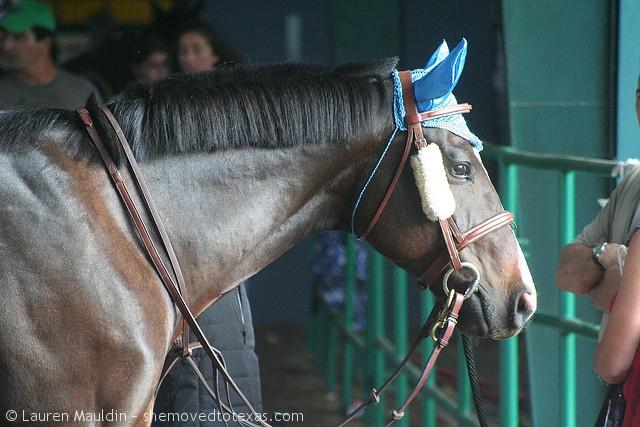 jumper-horse