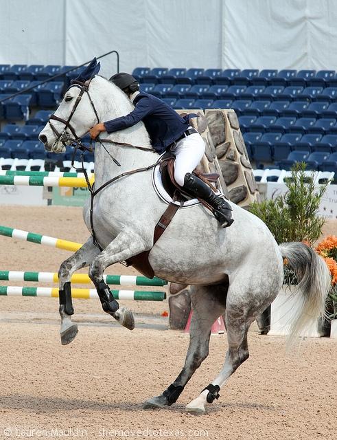 jumper-horse-rear