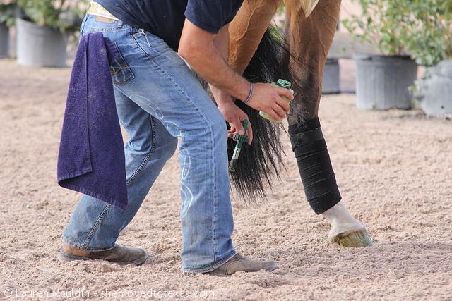 horse-polish