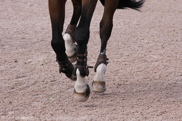 horse-hooves1