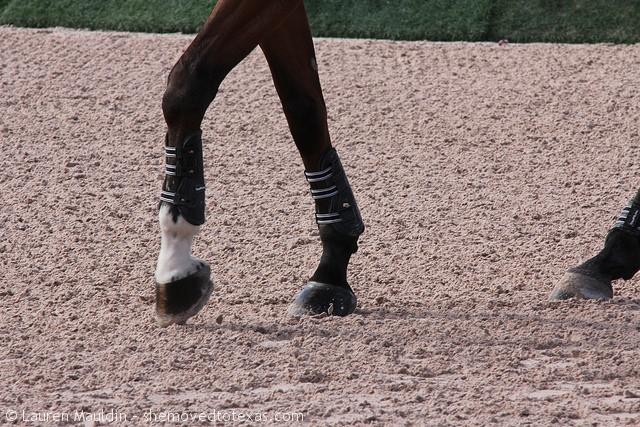 horse-hooves2