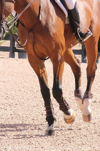 horse-hooves6