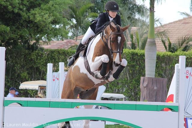 pinto-horse-jump