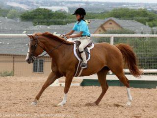 pony-hunter