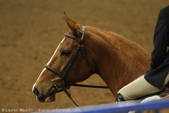 hunter-horse